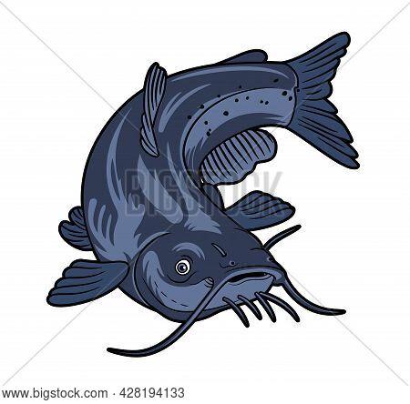 Catfish Vector Illustration Isolated On White Background.