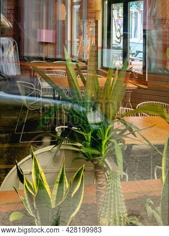 View On Cactus, Yucca And Sansevieria In Flower Pots Through Window Of Cafe. Green Leaves Of Housepl