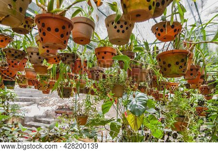 Greenhouse With Hanging Clay Pots. Special Flower Pots With Holes For Aerial Roots Of Tropical Plant