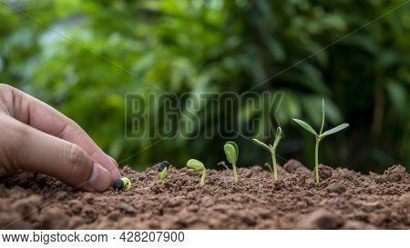 Planting Plants In Soil In Order Of Germination Or Plant Growth And Hand Planting Plants In Soil Pla