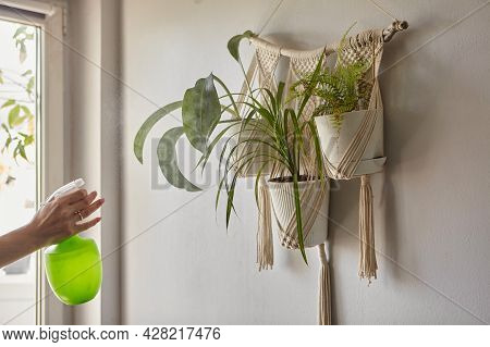 Beautiful Woman Holding Spray Bottle Near Plants. A Young Woman Looking After Houseplant. Indoor Pla