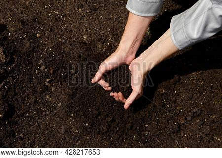 Close Up Hands Holding Sapling Of Young Plants. Concept Nature Conservation. Hands Planting Young Tr