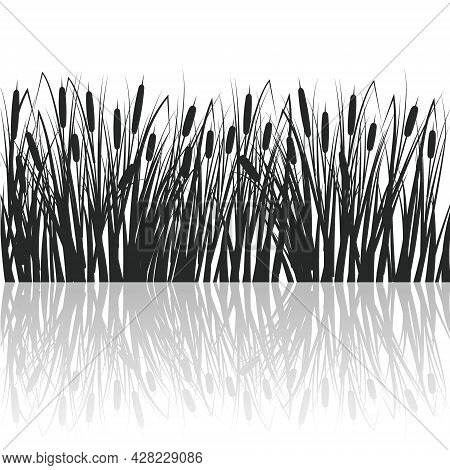 Silhouette Of Reeds And Rushes In The Green Grass. Swamp And River Plants With Reflection In Water.