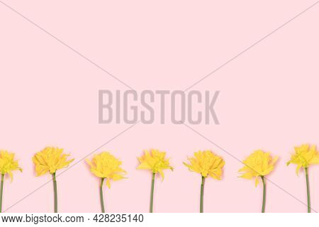 Repetitive Pattern Made From Head Of Yellow Wild Tulip Flowers On A Purple Pastel Background.