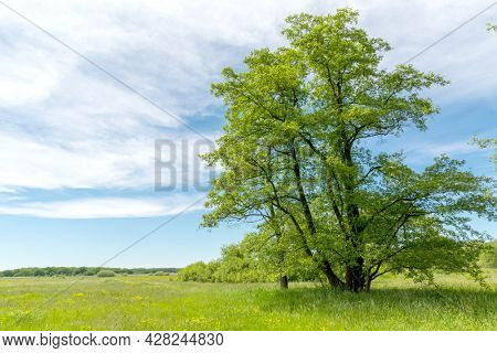 Summer landscape with green tree on meadow