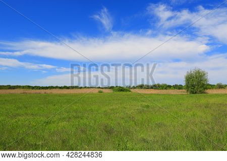 Summer landscape with green pasture under nice clouds in sky