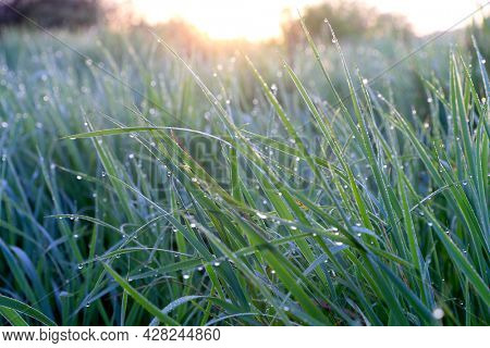 water drops of morning dew on green grass