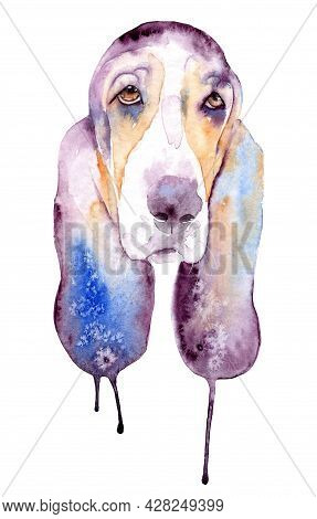 Watercolor Drawing Of A Pet - Dog. Basset Hound.