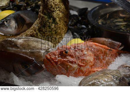 Fish Market Place. Fresh Seafood And Fish On Ice With Lemon. Valletta, Malta