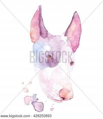Watercolor Drawing Of A Pet - Dog. Ibizan Hound.