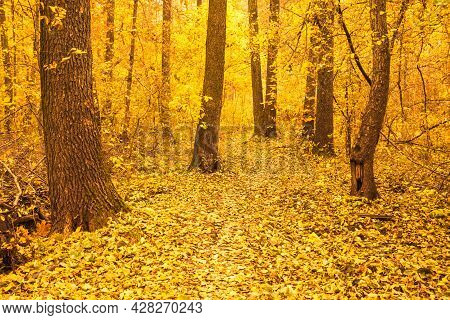 Path Road Way Pathway With Trees On A Sunny Day In Autumn Yellow Forest. Background