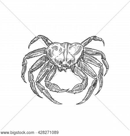 Hand Drawn Crab Vector Illustration. Abstract Seafood Sketch. Crustacean Engraving Style Drawing. Is
