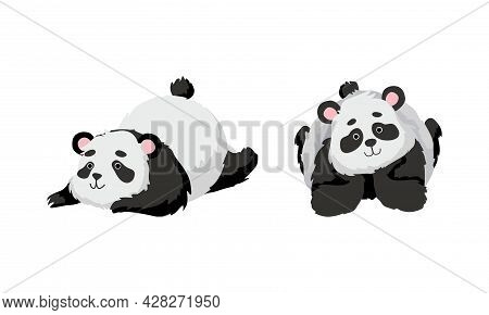 Funny Panda Bear With Black-and-white Coat And Rotund Body Lying Vector Set