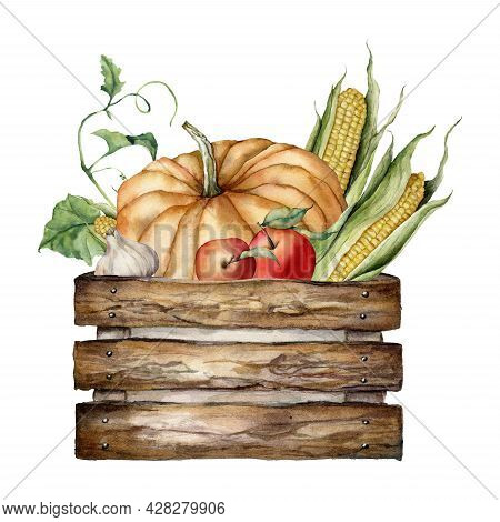 Watercolor Autumn Harvest Composition Of Pumpkin, Apple, Corn, Garlic And Wooden Box. Hand Painted G