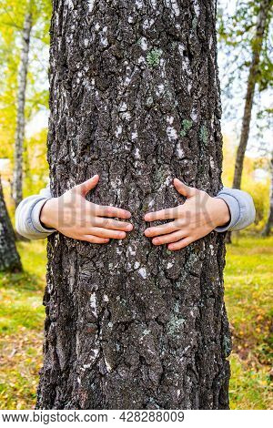 Hands On The Trunk Of The Tree In The Forest