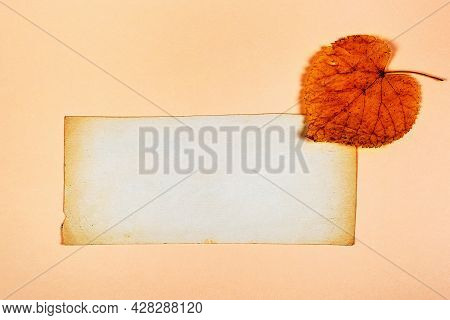 Autumnal Leaf With A Blank Paper Closeup