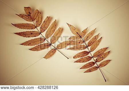 Vignetting Photo Of Autumnal Leaves On The Paper Background Closeup