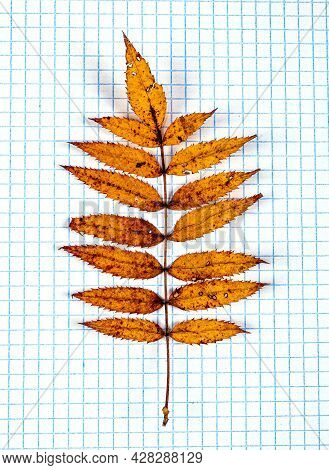 Autumnal Leaf On The Square Paper Background Closeup