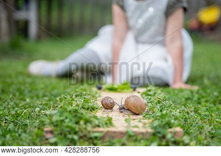 Two Snails, Small And Big, On A Wooden Board Placed On Green Grass With A Blurred Toddler Girl In Ba
