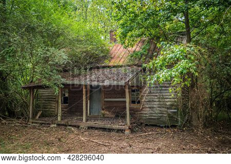 An Old Homestead Abandoned In The Woods Decaying And Falling Apart With Trees Growing Over The Dwell