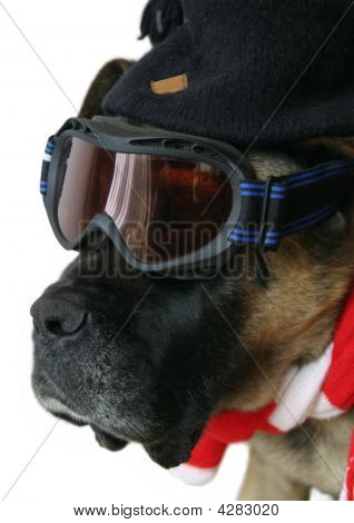 Dog In Snow Goggles
