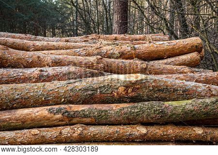 Wood And Wooden Logs Lie In The Forest After Harvesting, Deforestation
