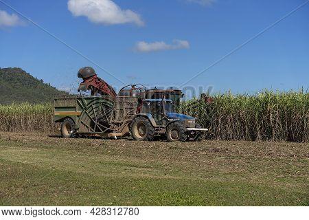 Mackay, Queensland, Australia - July 2021: A Cane Harvester Cutting Sugarcane On A Farm With The Hau