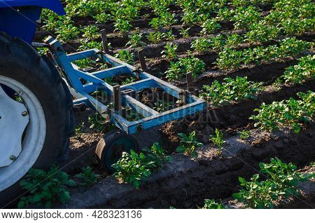 A Tractor With A Plow Is Cultivating A Field Of Potatoes. Agroindustry And Agribusiness. Field Work