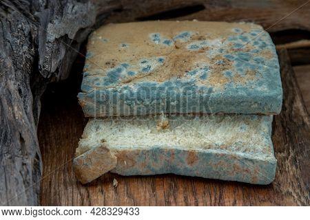 Mold Growing Rapidly On Moldy Bread Slices In Green And White Spores On Wooden Cutting Board. Rotten