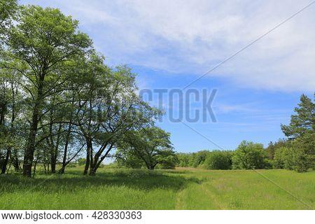 green meadow in summer forest. Take it in Ukraine