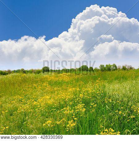 Summer landsape with flowers meadow under nice clouds in sky