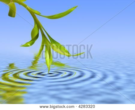 Bamboo Leafs Over Blue Water