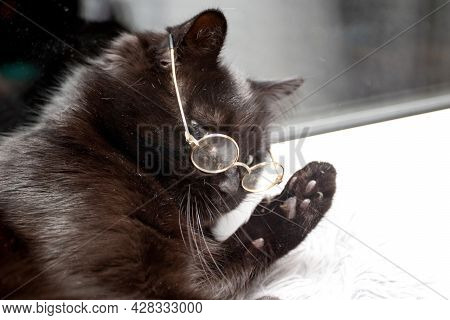 Portrait Of A Clever Black Cat With Glasses.