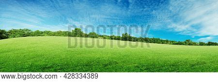 Green Natural View Of Green Grass Meadow Field In Public Park With Green Trees And Blue Sky In Backg