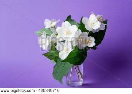 Bunch Of White Jasmine Flowers. Jasmine Bouquet In Glass Vase On Purple Background. White Flowers Wi
