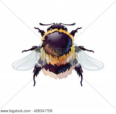 Cute Bumblebee, Top View Of An Insect. Macro