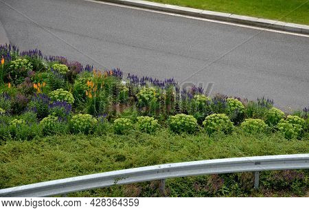 Lush Flower Bed With Sage Blue And Purple Flower Combined With Yellow Ornamental Grasses Lush Green