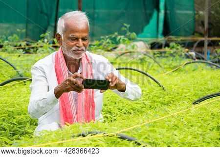 Farmer Capturing Photos Of Crop Saplings Or Plants At Greenhouse Or Polyhouse To Check About Plant G