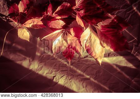 Wonderful Colorful Red And Yellow Autumn Ivy Leaves On Paper Textured At Sunbeams In Shady Studio Cl