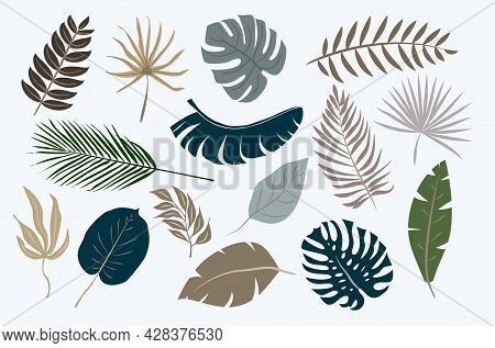 Collection Of Tropical Leaves Isolated On White Background, Vector Illustration