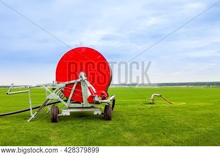 Watering A Vegetable Green Field With A Big Water Hose On The Red Bobbin In Summer. Agriculture And