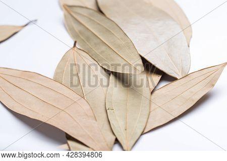 Leaf Spice, Talal Patra, Cinnamomum Tamala