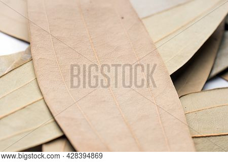 Closeup, Leaf Spice, Talal Patra, Cinnamomum Tamala