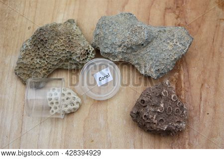 A Display Of Fossilized Coral Presented On Wood