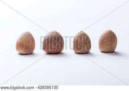 4 Supari, Areca Catechu