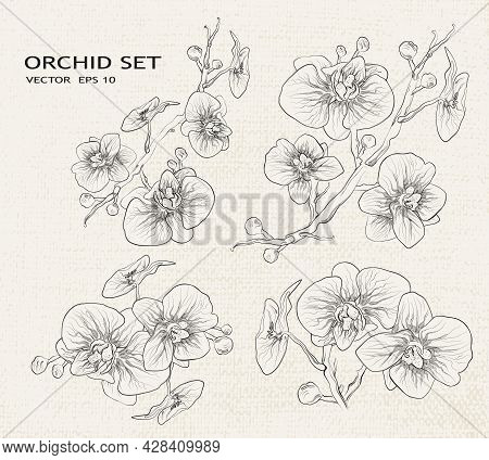 Orchid Vector. Floral Botanical Set Of Isolated Orchids. A Collection Of Tropical, Exotic Flowers, B