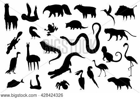Silhouette Animals Of South America. Nature Fauna Collection. Geographical Local Fauna. Mammals Livi