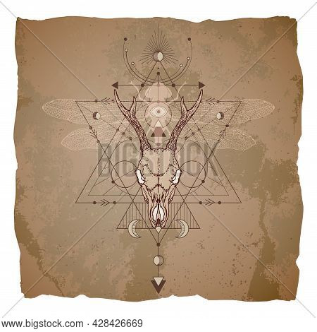 Illustration With Hand Drawn Roe Deer Skull, Dragonfly And Sacred Geometric Symbol On Vintage Paper
