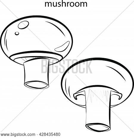 Mushroom Champignon. Whole Mushroom And Mushroom In The Section. Black And White Image, Coloring. He