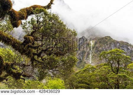 Overgrown Branches Of An Old Tree In The Rainforest Of The Southern Alps, New Zealand